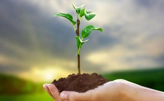 Mão segurando um punhado de terra com uma pequena árvore plantada nesta terra.